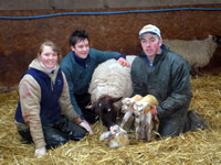 Lambing season, every Easter at Blaze Farm